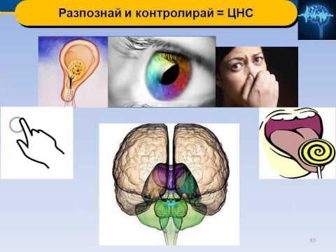 Научно шоу по Невромаркетинг